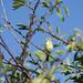 In the cherry tree #2
