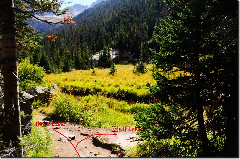 Bear right to the unmaintained social trail across glacier creek up to Shelf Lake from this meadow