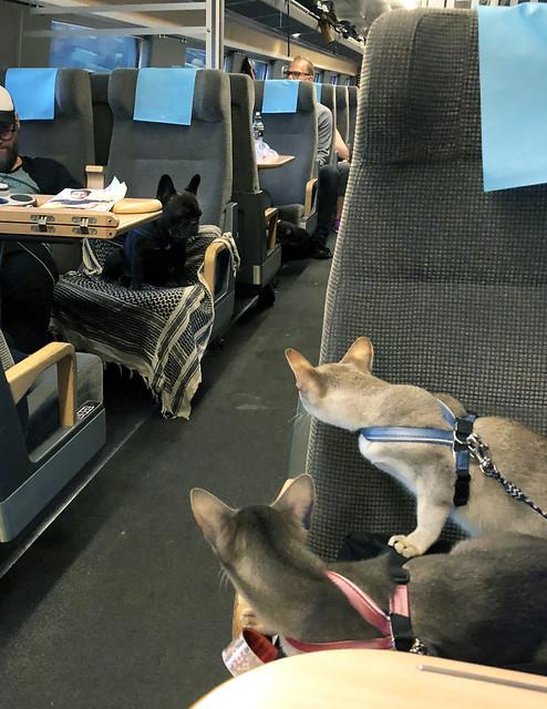 zakrorydog-trainIMG_4368