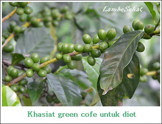 Green Coffe Trend Diet Masa Kini Yang Harus Dicoba