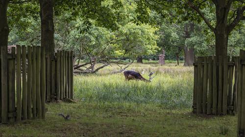 Deer and Squirrel · Dunham Massey