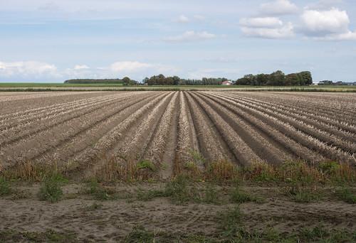 Aardappelveld