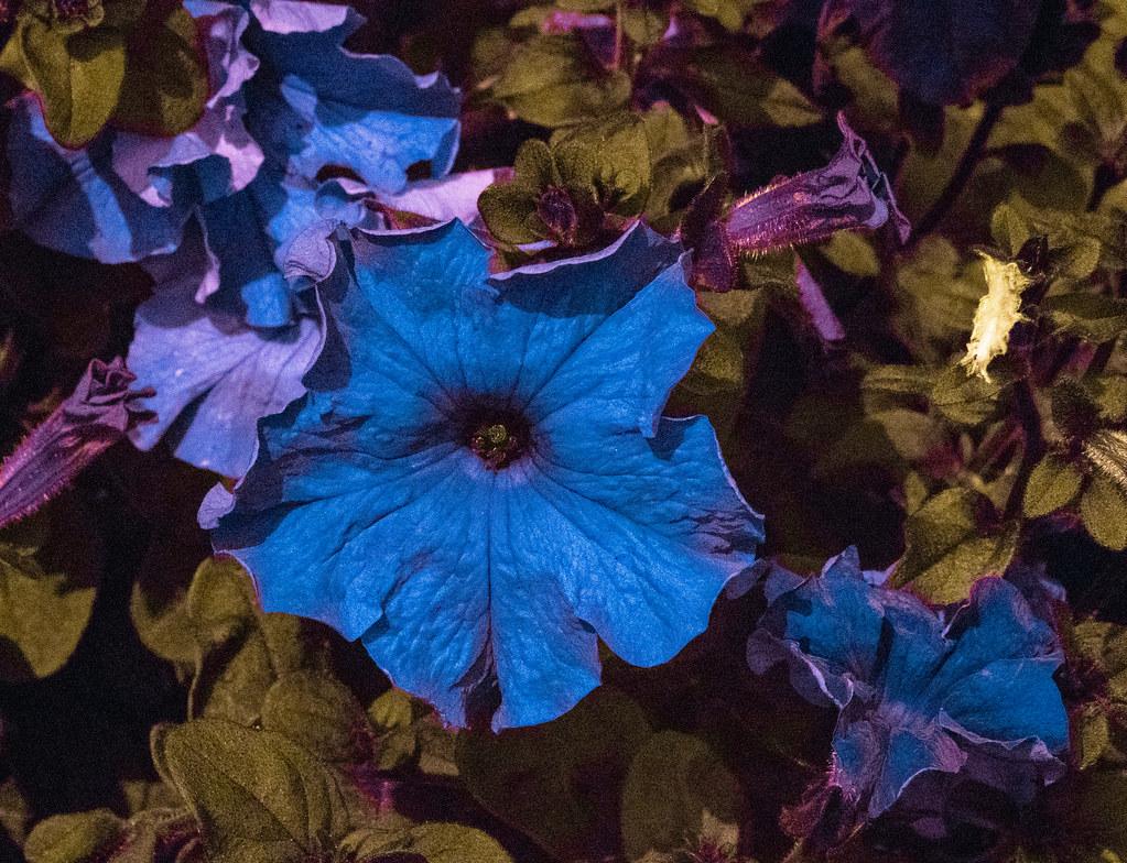 UV Plant_11