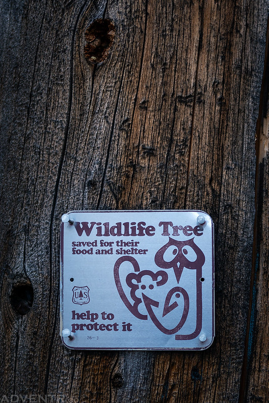 Wildlife Tree