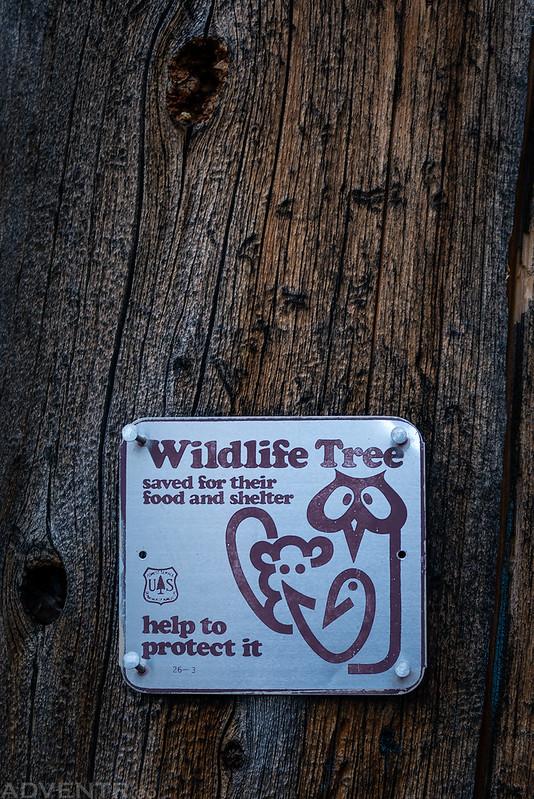 Wildlife Tree