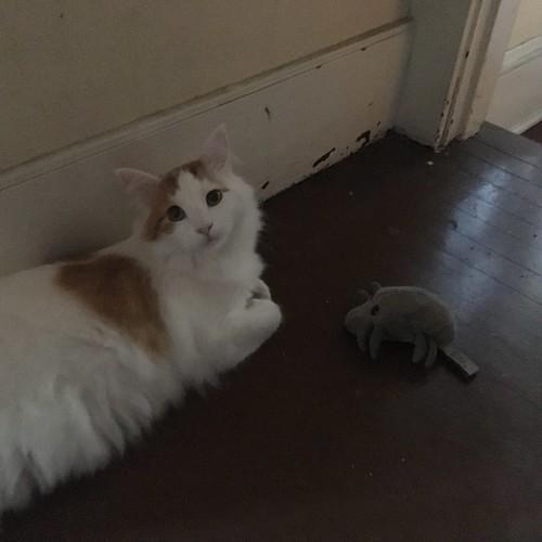 Ozy & Mite