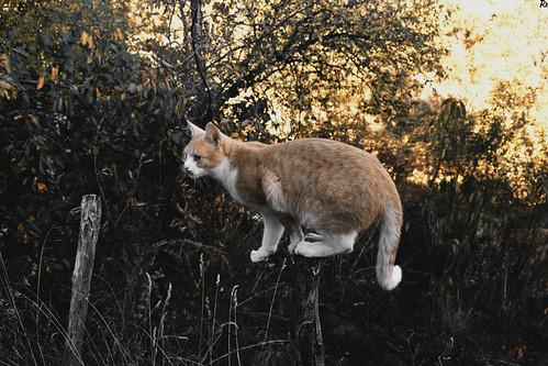 Bežo 19 | Cats Edition 10