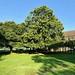 A fine chestnut tree 242:365 JF (2)