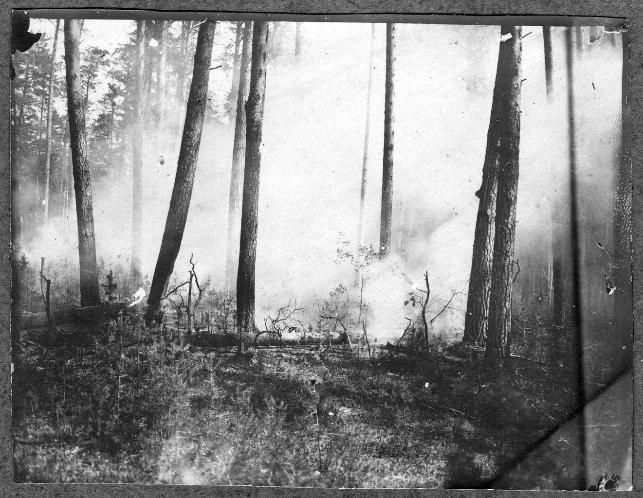 Лесной пожар в 20 верстах от горы Верхотурье на Урале