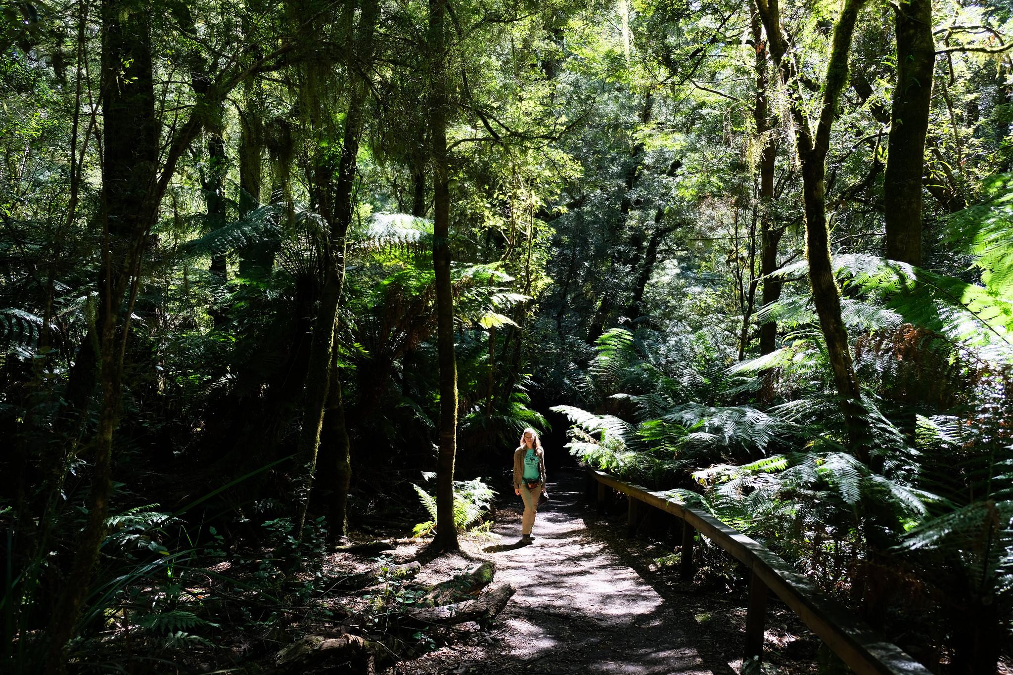 Great Otway, Victoria, Australia
