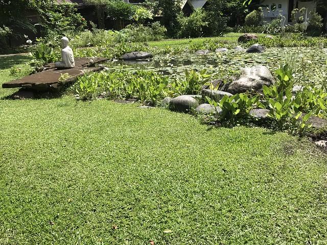 Alicia's secret garden and pond
