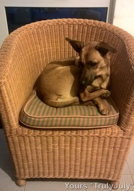 Why the fuss? Of course I fit perfectly well into this chair. I just need to put my leg somewhere...
