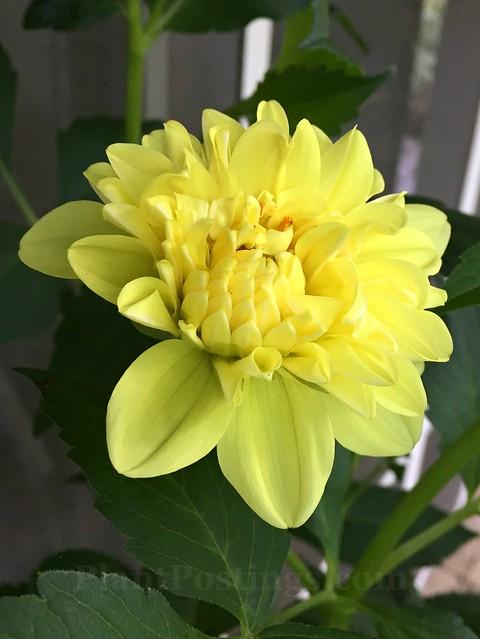 yellow opening
