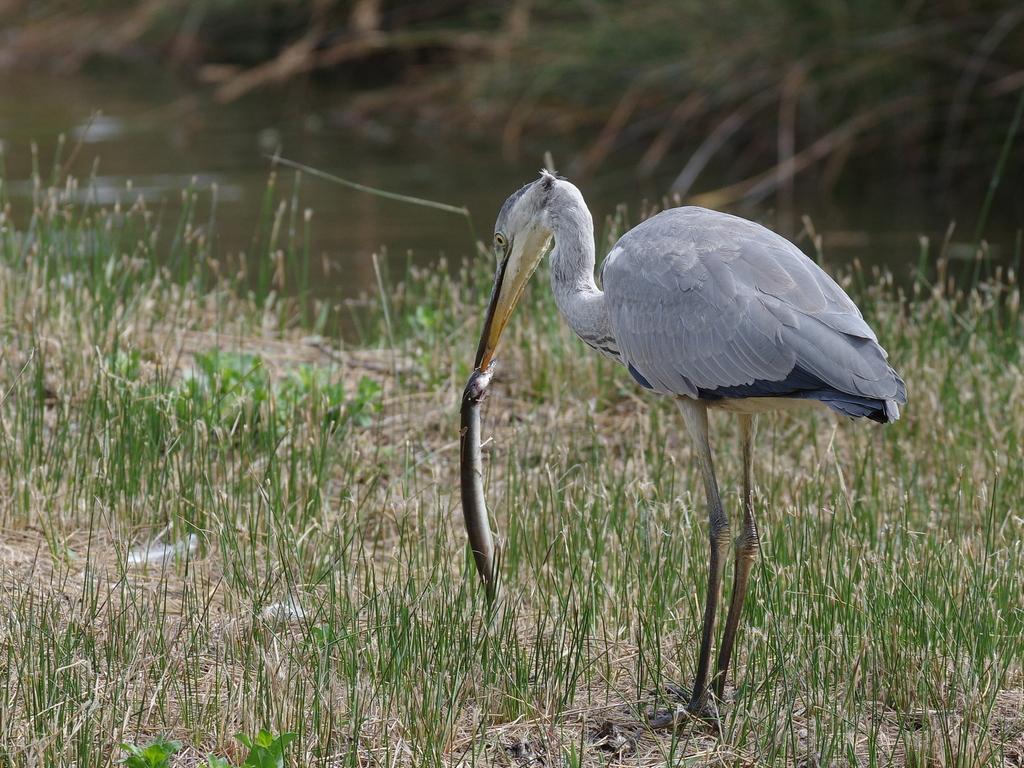 Sortie à la réserve ornithologique du Teich - 24 août 2018 - Page 6 43567804115_9976d27a88_o