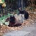 Cats, Albany Road, Leyton