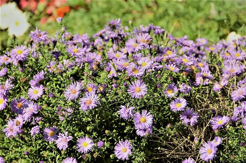 Flowers 15.09 (1)