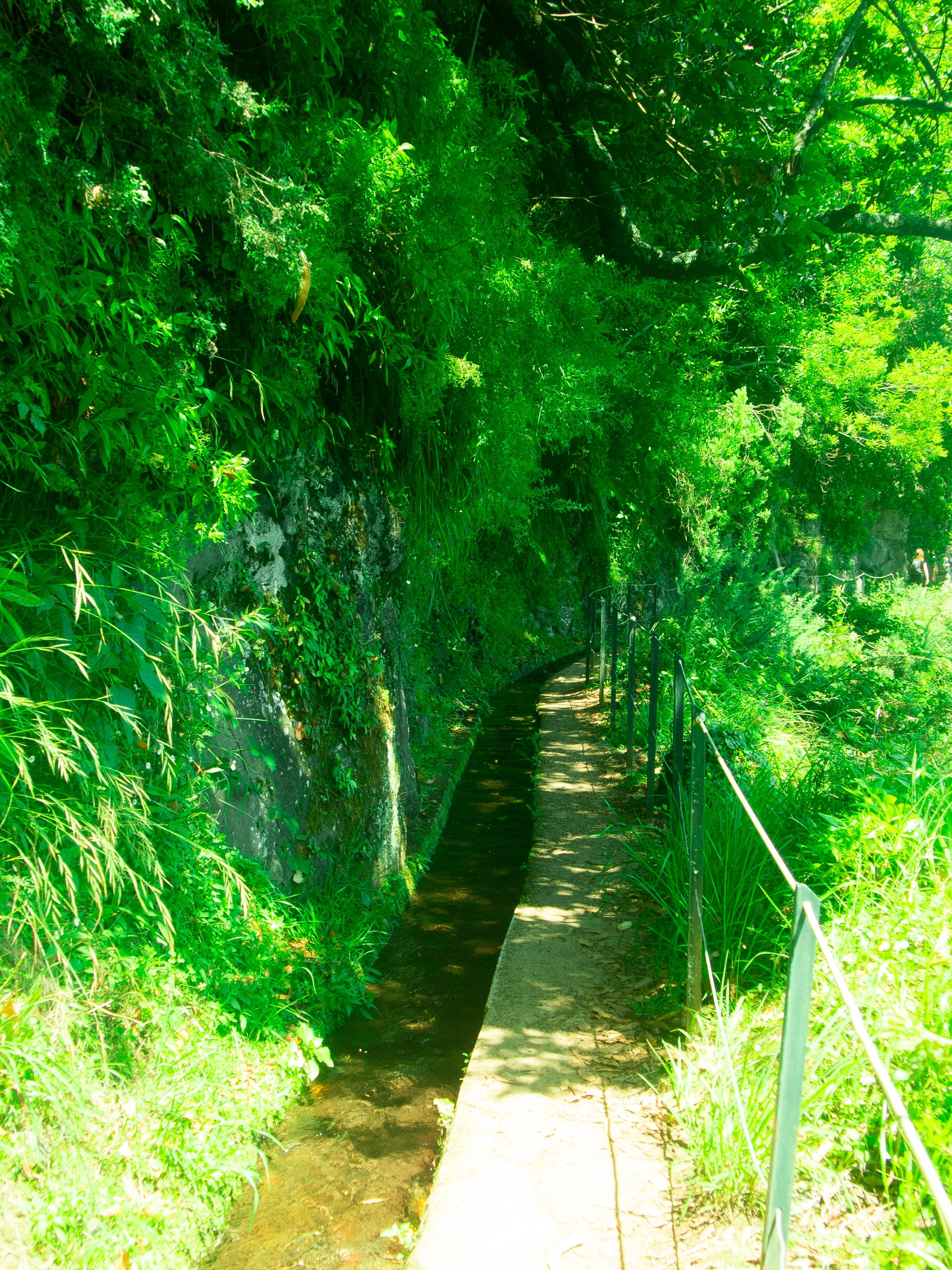 King's Levada Madeira15