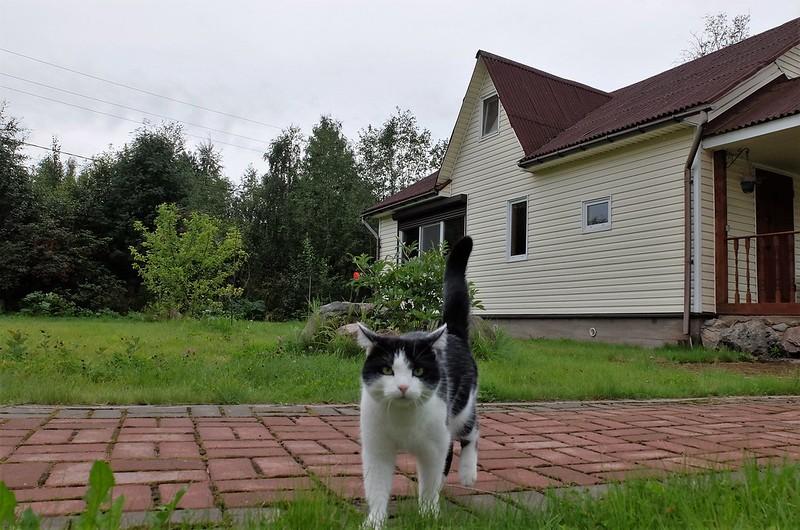 Дачные фото и кошечка Фрося