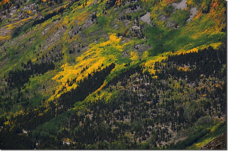 Aspen leaves have already turned golden yellow along the trail (7)