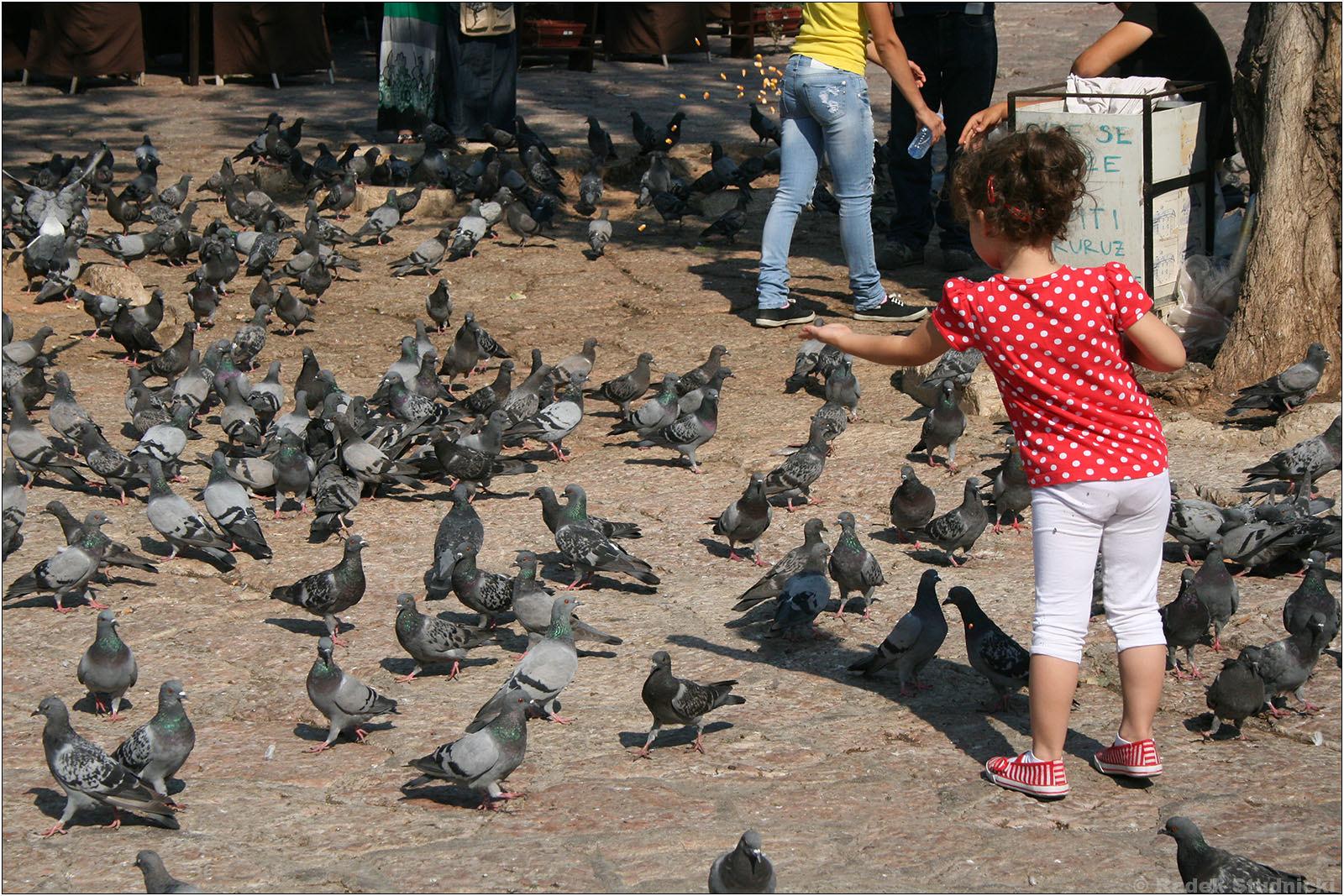 Gołębie w Bascarsiji