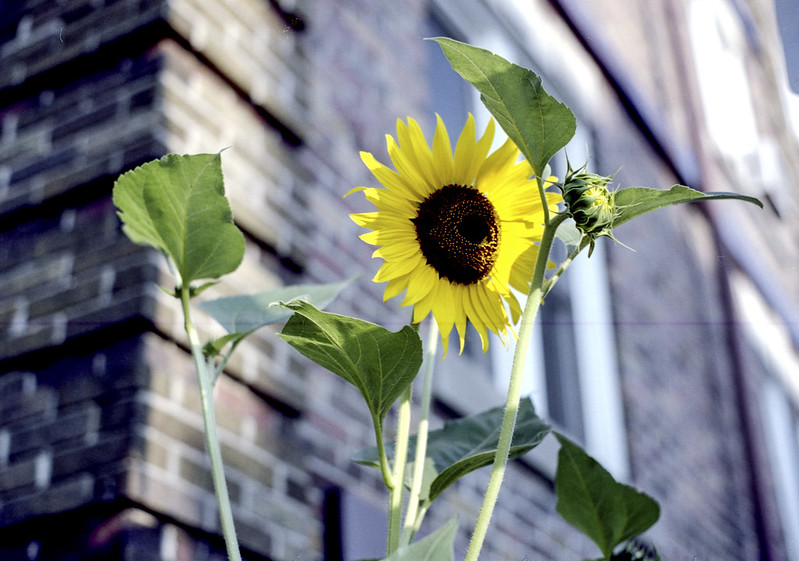 Apartment Sunflower