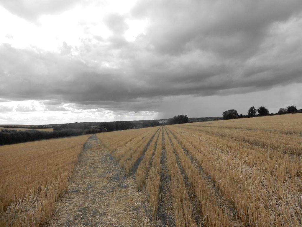 Cornrows Kings Sutton Circular
