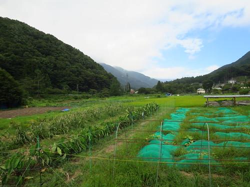Doshi-mura, Yamanashi