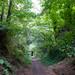 Deep cutting, South Staffordshire Railway Walk