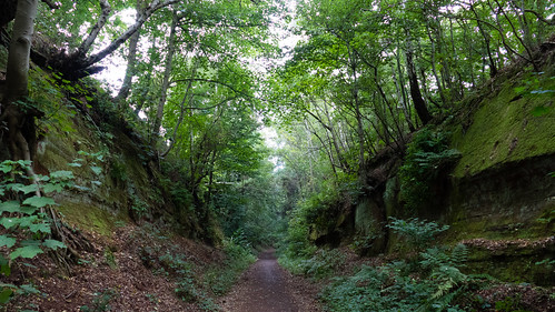 Deep cutting, South Staffordshire Railway Walk