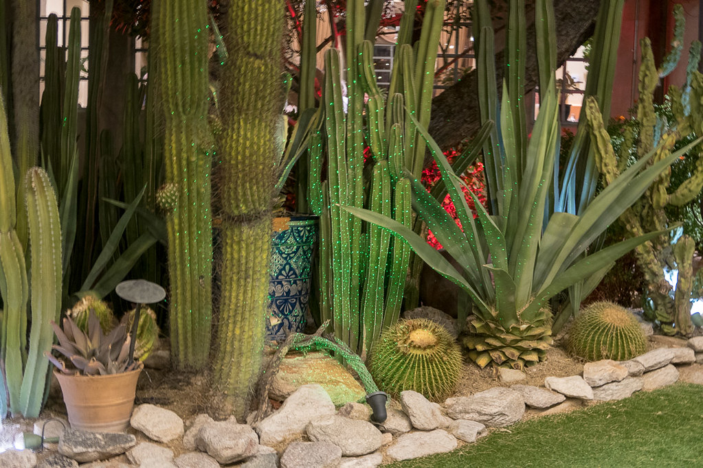 Hotel Grounds | Hacienda del Sol | Tucson hotel review