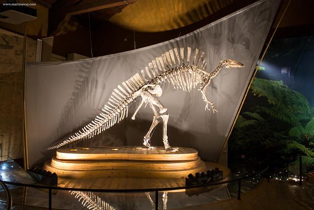 Ouranosaurus nigeriensis, Museo di Storia Naturale