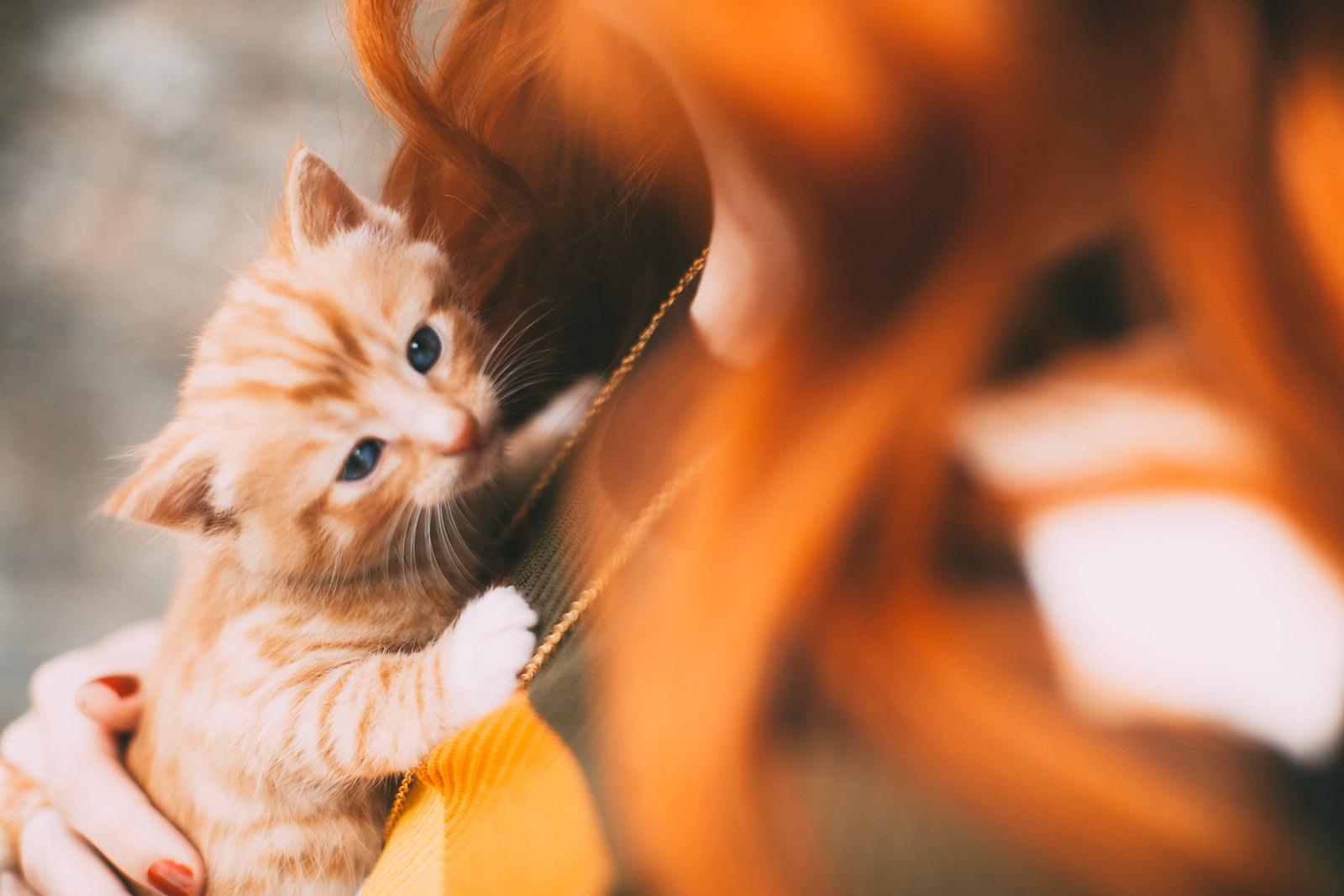 ginger kitten-19