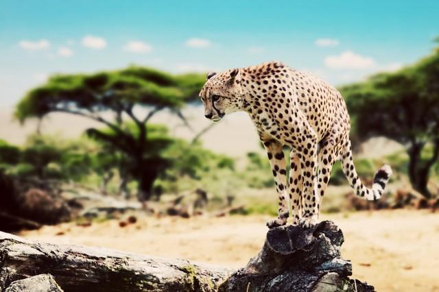Afrika'nın En İyi Safari Ülkeleri