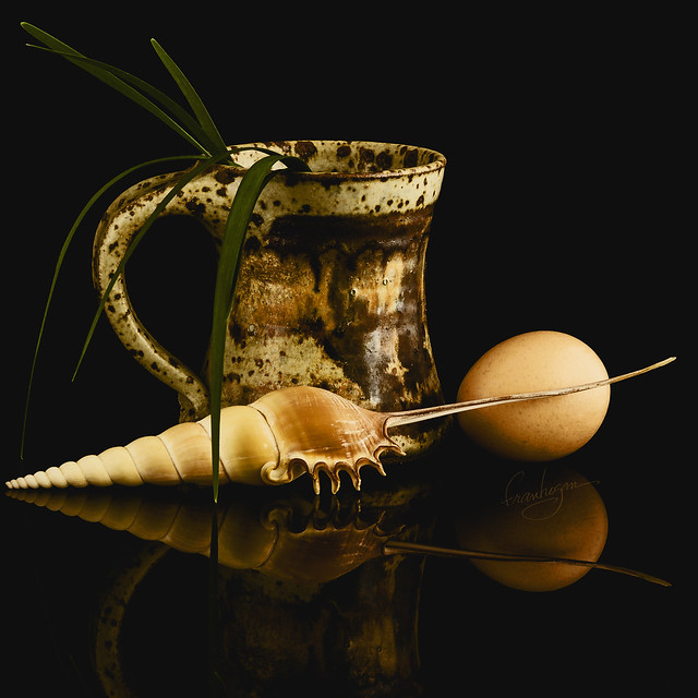 Still Life with Seashell