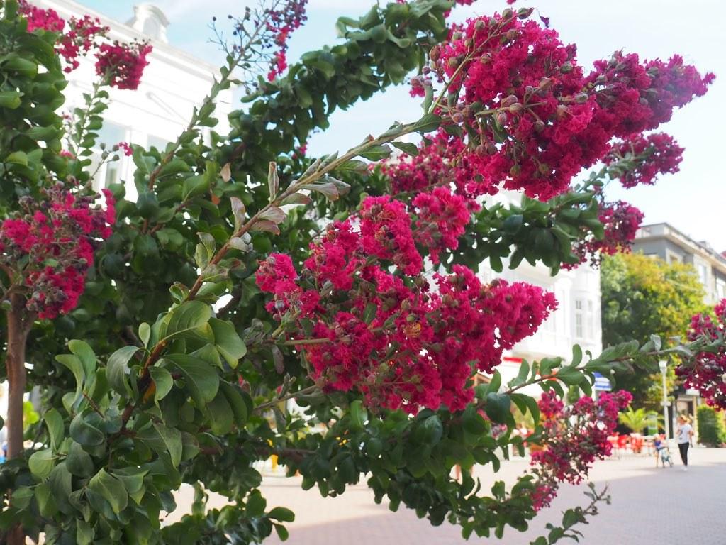 Растение - красное