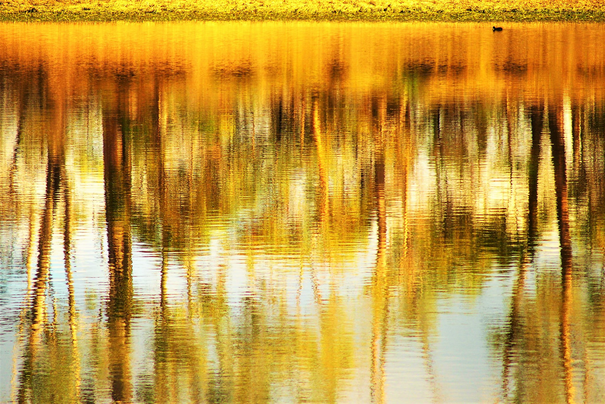 Upside down Barossa Reservoir Reflections, South Australia