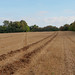 Fields near Effingham-E9150075