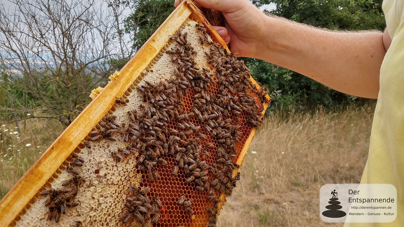 Bienenvölker und Honig - Beim Rheinhessen-Imker