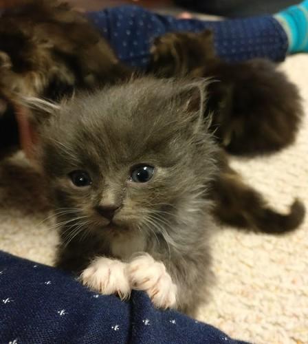 Jake's kitten