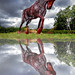 Horse Sculpture Reflections by Yorkshire Pics