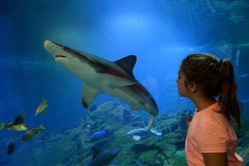 big fish :)