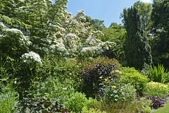 2018.06.20.071 CASTILLON - Les jardins, allée des fleurs