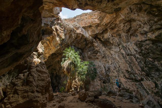 Boca de entrada a Cueva de Neptuno y palmito