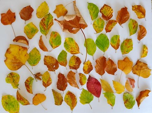 Autumn teaser
