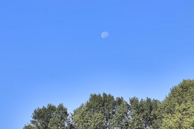 Moon in the day ?☀️, Canon EOS 800D, Canon EF 75-300mm f/4-5.6 IS USM