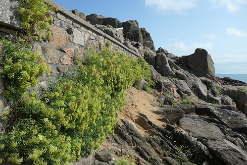 Plants growing on a wall by the sea - Explore!