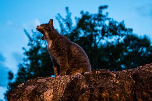Katze auf Wachposten
