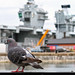 Portsmouth Pigeon