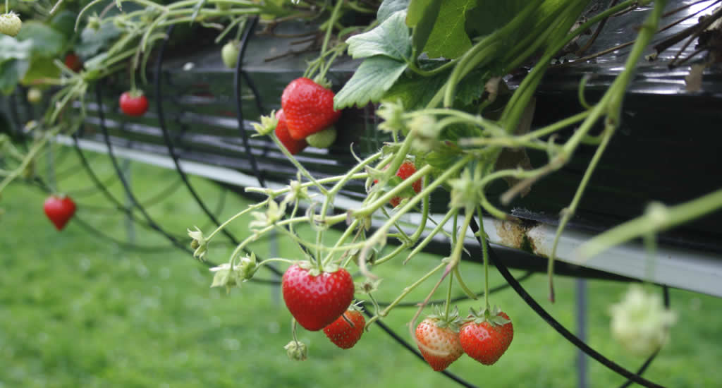 Texel with kids: pick your own fruit and vegetables | Your Dutch Guide