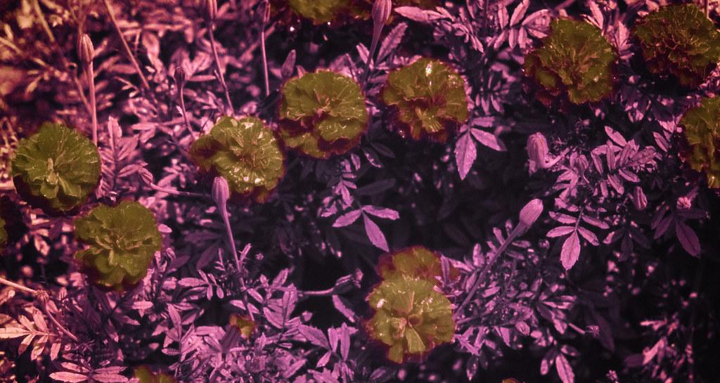UV Plants_1